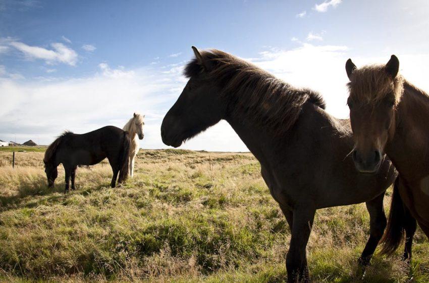 Hestdagur Háfeta í Reiðhöll Guðmundar