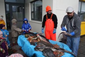 fiskasyning-bergheimar-2016-1